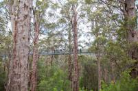rs130_southernforestswalpolewilderness_treetopwalk_karri_family_ablebodied_20111112_16-lpr